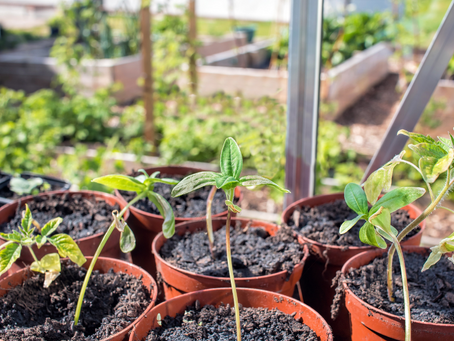 How to Plan and Start a Simple Herb and Veggie Garden for your Home