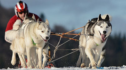dog-sled-tour-1.jpg