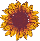Sunflower - Web.png