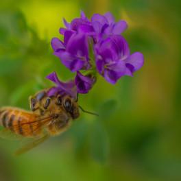 """""""Pollen-pincher"""" (July 2018)"""