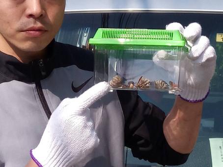 2018.5.5埼玉県越谷市   蜂駆除作業日記を始めました。