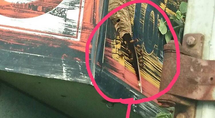 これから茨城県牛久市でモンスズメバチの駆除です