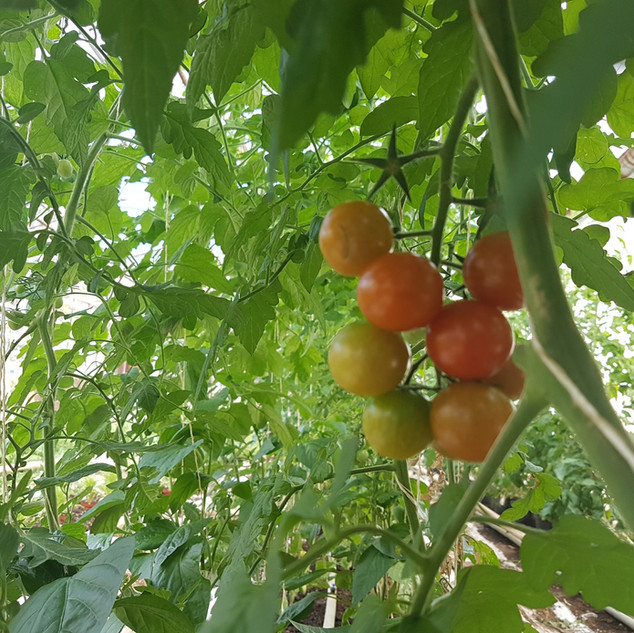 From our greenhouse on Akur