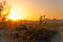 backlit-blurred-background-desert-122256