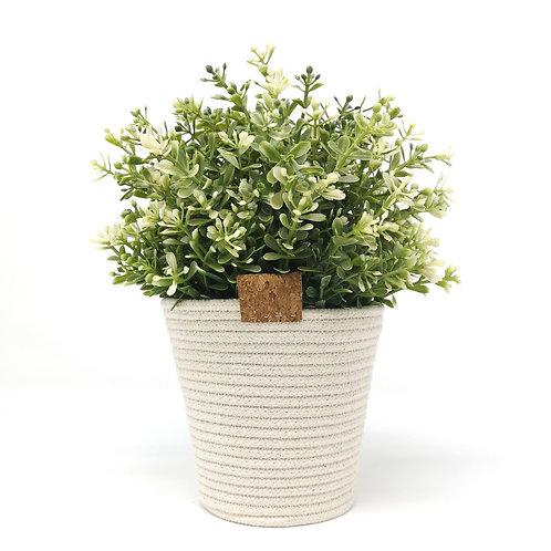 Cotton Plant Pot