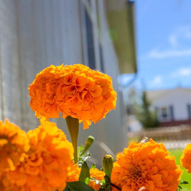 B_House2_4.jpg