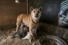 Um dos maiores mercados de carne de cachorro da Coréia do Sul é enfim fechado, e no local será criad