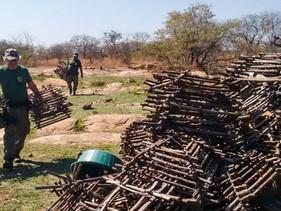 Ibama destrói 16 mil armadilhas e impede captura de até 64 mil aves diariamente em rota migratória n