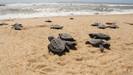 Projeto Tamar comemora 40 anos com 40 milhões de tartarugas soltas