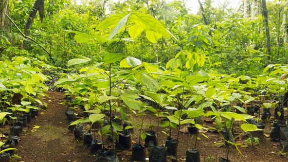 Corredor de 1,7 bilhão de árvores vai conectar a floresta amazônica e o Cerrado