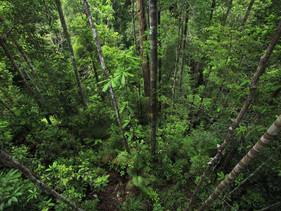 Cientistas catalogam o DNA de árvores para contribuir com a preservação da Amazônia