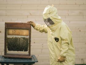 Lamborghini cria programa de monitoramento ambiental que conta com a ajuda de 600 mil abelhas