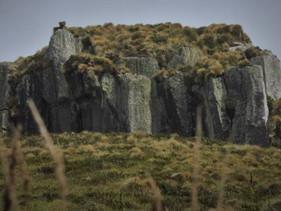Predadores são eliminados de ilha que abriga espécies ameaçadas de extinção na Nova Zelândia