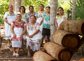 Mulheres maias protegem abelhas sem ferrão da extinção no sul do México