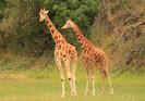 Neozelandeses doam US $ 230.000 para ajudar santuário de vida selvagem a alimentar animais durante a