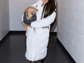 Ariana Grande acaba de inaugurar um abrigo para adoção de animais em Los Angeles