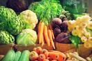 Prefeito de Florianópolis sanciona lei que proíbe agrotóxicos em todo o município