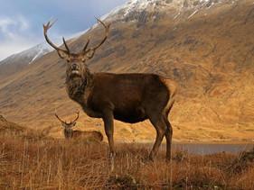 Escócia vai recuperar 30% de seus territórios naturais até 2030