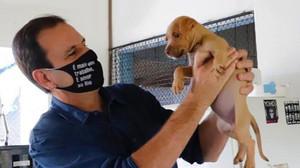 Eduardo Paes sanciona lei no RJ que obriga agressores de animais a pagar pelo tratamento dos bichos
