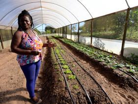 Cafundó: a comunidade quilombola que produz alimentos orgânicos