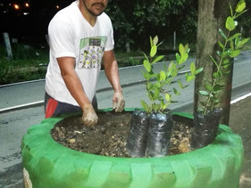 Agrônomo recicla pneus e usa como vasos para decorar rua em Rorainópolis, ao Sul de Roraima