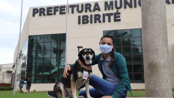 """Prefeitura de Ibirité (MG) adota cadela de rua e ela ganha até crachá para """"trabalhar"""""""