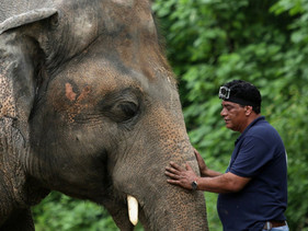 """'Kaavan'.  Após 35 anos o """"elefante mais solitário do mundo"""" será libertado em san"""