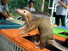 China proíbe o consumo e comércio de animais selvagens