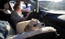 Com quarentena, cães e gatos para adoção se esgotam em abrigos de Nova York e outros estados america