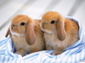 Califórnia é o primeiro estado dos EUA a proibir testes de cosméticos em animais