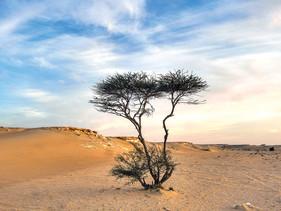 Arábia Saudita vai plantar 50 bilhões de árvores