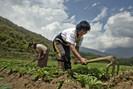 Butão será o primeiro país com agricultura 100% orgânica do mundo