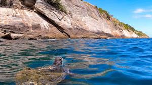 Tartarugas-verdes têm novo habitat no RJ graças ao projeto Ilhas do Rio