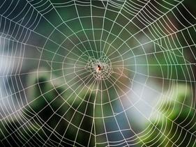 Cientistas da Finlândia criaram um novo material feito de teia de aranha e madeira que pode substitu
