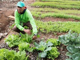 São Paulo ganha escola de horticultura para moradores de rua