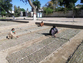 Paquistão contrata milhares de trabalhadores recém-desempregados para um projeto de plantio de 10 bi