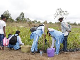 Madagascar plantará 60 milhões de árvores até Abril para ajudar a combater as mudanças climáticas