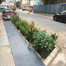 São Paulo está espalhando jardins de chuva na região central