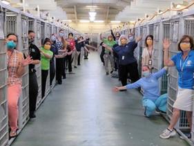 Abrigo de animais da Flórida comemora canis vazios depois que todos os cães foram adotados pela prim