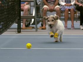 Cães abandonados irão recolher bolinhas em torneio de tênis em São Paulo