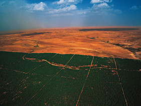 Grande Muralha Verde pode ser a solução para muitos países africanos.