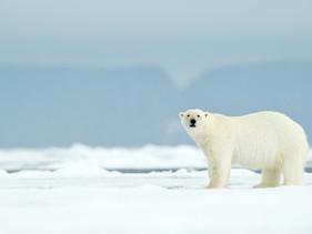 O maior buraco na camada de ozônio já registrado, que ocorreu no Ártico,se fechou
