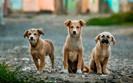Califórnia se tornou o primeiro estado a exigir que lojas de animais vendam apenas animais de resgat