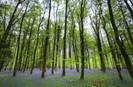 Irlanda plantará 440 milhões de árvores até 2040 para combater a mudança climática