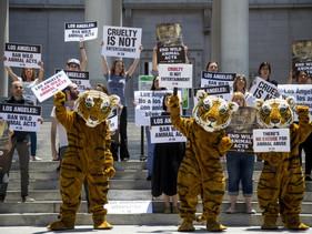 Após pressão popular, Califórnia proíbe animais selvagens em circos