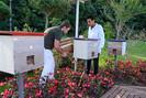Jardins de Mel: colmeias de abelhas sem ferrão são instaladas pela prefeitura em áreas públicas de C