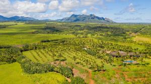 Havaí se compromete a plantar, conservar, e restaurar 100 milhões de árvores até 2030