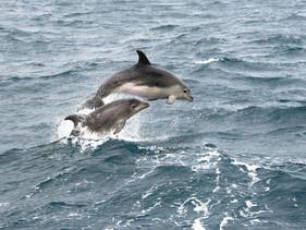 Turistas foram proibidos de nadar com os famosos golfinhos da Nova Zelândia por influenciarem na que
