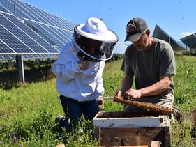 Fazenda de energia se transforma em apiário solar nos Estados Unidos