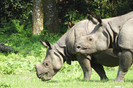 População de rinocerontes em extinção no Nepal cresce graças à santuários de conservação